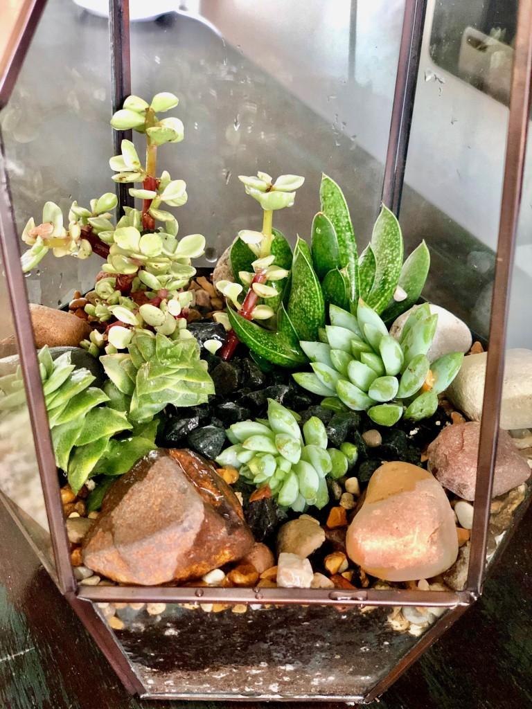 4. terrarium